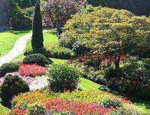 Using Garden Design Software